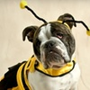 Pupcakes Pet Boutique - Shandon: $5 for $10 Worth of Treats, Toys, and Apparel from Pupcakes Pet Boutique