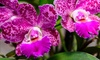 Up to 50% Off Admission to Orchid Mania