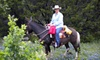4-C Stables - Mid-Villa Estates: One, Three, or Five 60-Minute Private Horsemanship Lessons at 4-C Stables in Waxahachie (Up to 58% Off)