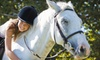Equestrian's First Place - The Acreage: One or Two One-Hour Private Horseback-Riding Lessons at Equestrian's First Place in Royal Palm Beach