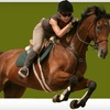 Up to 63% Off Horse-Riding Lesson for Two in Wimberley
