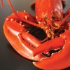 Up to 63% Off Live Maine Lobsters from Get Maine Lobster