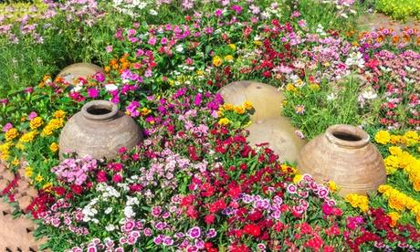 Wildflower Ground Cover Gardens Roll Out Seed Mats (3-Pack) e3d5b620-d187-409f-a72c-d6d0d892a3da
