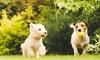 Fischio di addestramento per cani