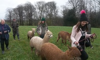 Alpaca Walking And Fleece Craft Course with Lunch for One or Two at Charnwood Forest (50% Off)