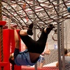 One-Hour Obstacle Course Entry