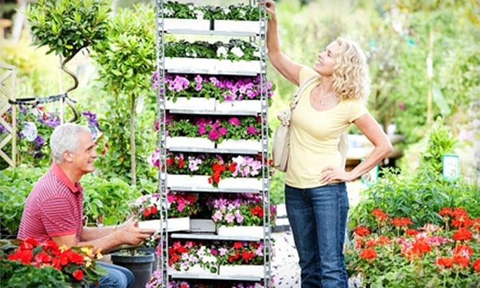 Edward's Garden Centre - Calgary: $20 for $40 Worth of Plants and Garden Accessories at Edward's Garden Center