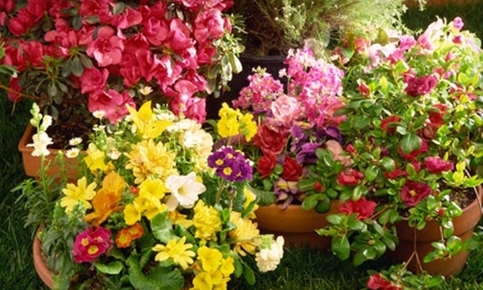 Groundcovers Greenhouse and Nursery - University Hills: $25 for $50 Worth of Plants and Gardening Supplies at Groundcovers Greenhouse and Nursery