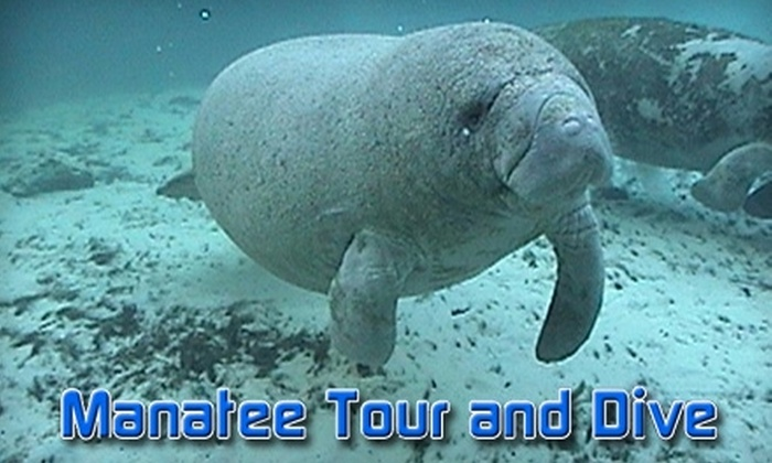 Manatee Tour and Dive - Crystal River: $24 Adult Admission ($49 Value) or $12 Child's Admission ($24.50 Value) to Manatee Tour and Dive