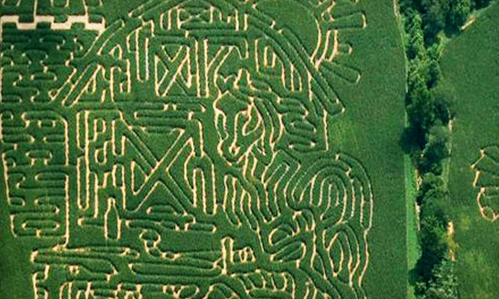 Adventure Acres Corn Maze - Bellbrook: Up to Half Off Corn-Maze Day for Two in Bellbrook