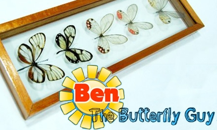 Ben the Butterfly Guy - Charlotte: $22 for $45 Worth of Butterfly-Art Decorations from Ben the Butterfly Guy