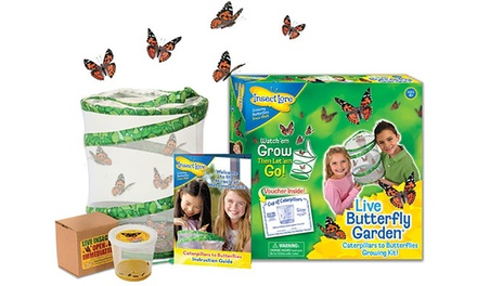 One, Two or Three Insect Lore Live Butterfly Garden Sets