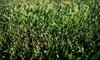Good Nature Organic Lawn Care: Lawn-Beautification Services from Good Nature Organic Lawn Care (Up to 61% Off). Three Options Available.