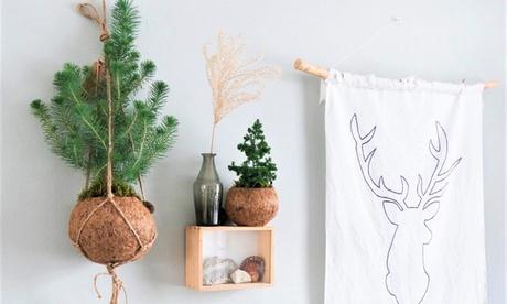 Hasta 3 árboles de Navidad Kokodama