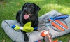 Wagging and Walking: $10 Off $20 Worth of Pet - Sitter / Walking