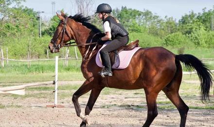 Knightsplace Farm Equestrian Centre