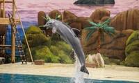 Trio Ticket nouveau spectacle de Noël magique avec des dauphins, entrée inclus pour l'indoor et la patinoire dès 14,99€