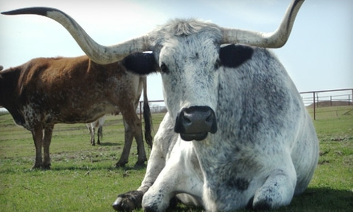 Beaumont Ranch - Grandview: $55 for a Complete Cowboy Experience at Beaumont Ranch
