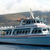 Up to 23% Off Whale Watching Tour