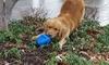 Durable Clutch Football Dog Toys: Durable Clutch Football Dog Toys