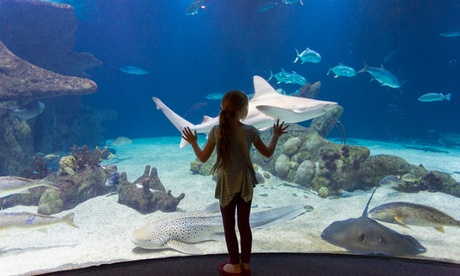 Food and Drink at Shark Reef Cafe (Up to 40% Off). Two Options Available.
