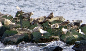 American Princess Cruises: Winter Seal & Bird Watching Adventure Cruise from American Princess Cruises (Up to 50% Off)