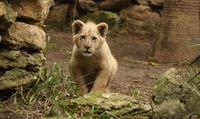 Visita al Zoo Castellar para adultos y niños desde 17,50 €