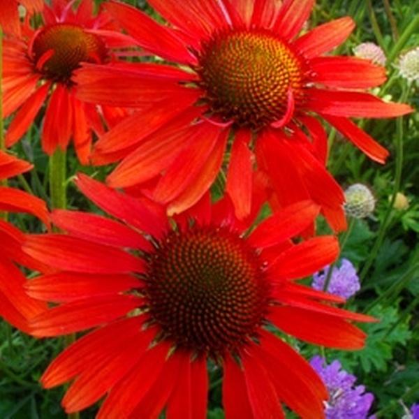Half Off Flowers And Plants At Budd Gardens Budd Gardens Perennials Groupon
