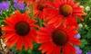 Budd Gardens Perennials  - Blackburn Hamlet: $15 for $30 Worth of Flowers and Plants at Budd Gardens Perennials