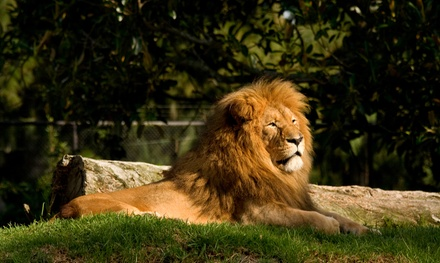 Gloucestershire: 1 or 2 Nights for Two or Four with Breakfast and Bristol Zoo Tickets at Best Western The Gables Hotel