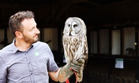 Owl Handling Experience at Fixter Falconry (60% Off)