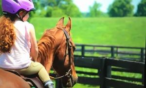 Ainsley Farm & Riding Academy: Four or Six Horseback Riding Lessons at Ainsley Riding Academy (Up to 76% Off)
