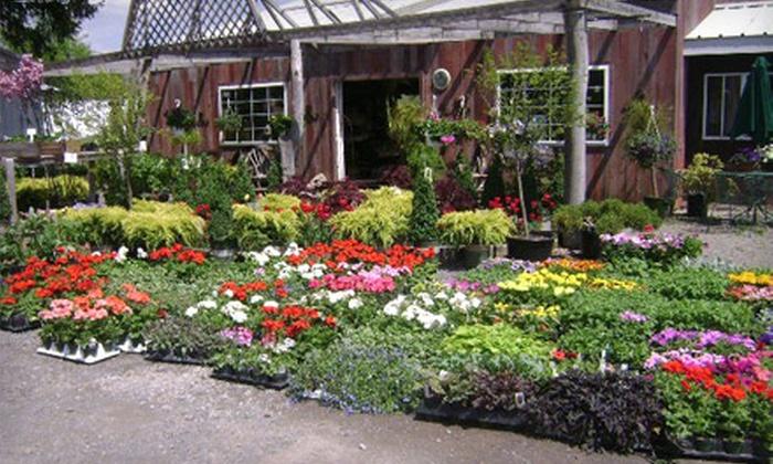 Salmon Creek Nursery - Brockport: $25 for $50 Worth of Plants at Salmon Creek Nursery in Brockport
