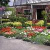 Half Off Plants in Brockport