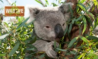 WILD LIFE Sydney Zoo Entry with Meal Package - Child ($25) or Adult ($35), Darling Harbour (Up to $55 Value)