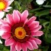 Half Off Plants and Garden Supplies in Watrous