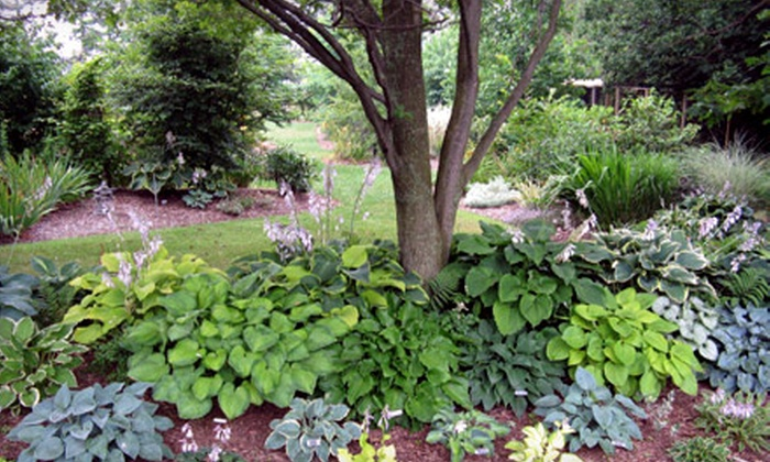 Shades of Green - Aylmer: $15 for $30 Worth of Hostas, Day Lilies, and Perennials at Shades of Green in Aylmer