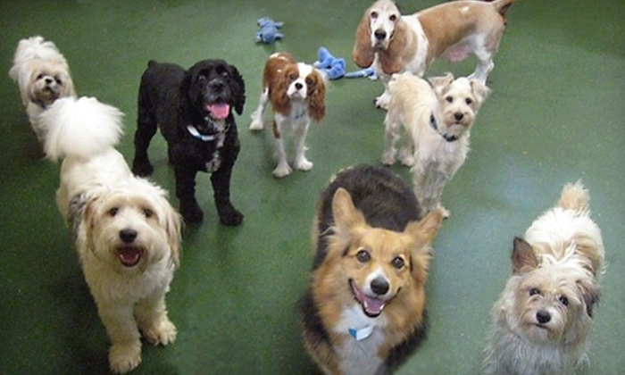 The Park Pet Retreat - Tucker: $35 for Two Nights of Dog Boarding at The Park Pet Retreat ($75 Value)