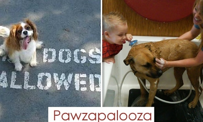 Pawzapalooza - Central Scottsdale: $6 for a Self-Service Grooming Session at Pawzapalooza