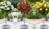 1 of 2 in pot gekweekte rozenstruiken