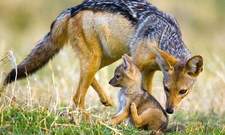 Entrada básica o premium a Zoo Safari Fauna Aventura para 1 o 2 adultos y 1, 2 o 3 niños desde 10,90 €