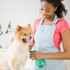 Up to 48% Off Dog Grooming or Shavedown at Whiskers and Tails