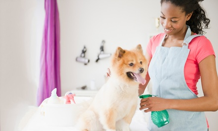 Bath, Brush, De-shed, Nails and Face, Feet, or Fanny Clean-Up at Pam's Doggie Do's & Kitties Too (Up to 50% Off)