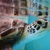 Georgia Sea Turtle Center – Up to $11 Off