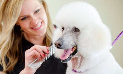 image for Grooming Service for Small, Medium or Large Dog at The Grooming Lodge