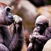 Zoo Atlanta – Up to 55% Off Visit