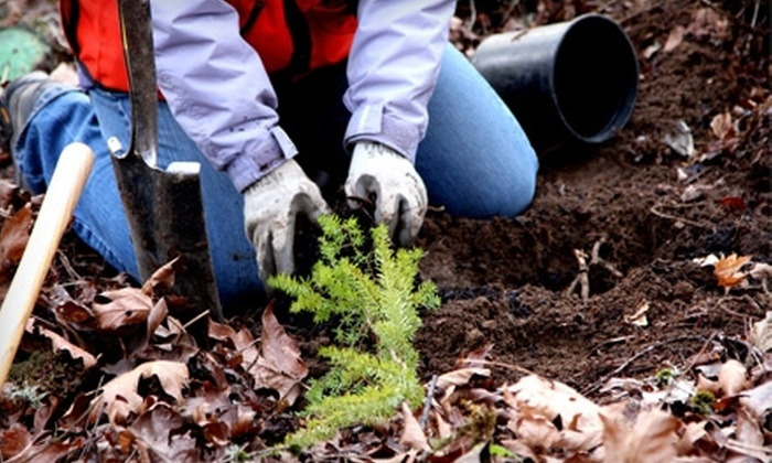 Friends of Trees: Donate $15 to Help Friends of Trees Restore the Canopy of the Collins Sanctuary in Forest Park
