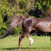 Up to 73% Off Horse Riding in Lutz