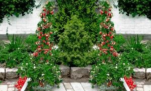 Set fraisiers grimpants Hummi®