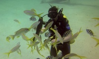 Discover Scuba Diving Session for One or Two at Vivian Dive Quarry (56% Off)